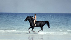 Read The Black Stallion